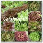 Salatvielfalt
