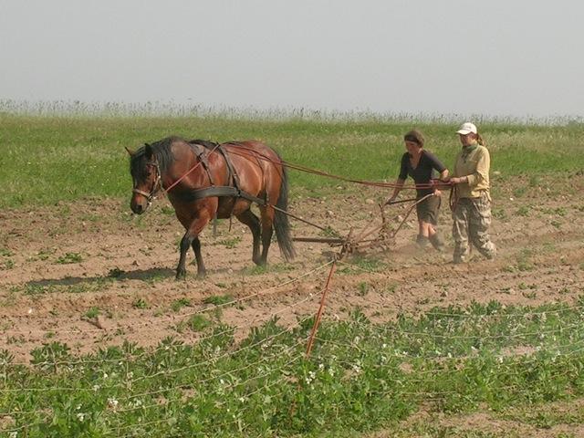 Waldgarten1 2012