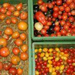 Tomatensorten