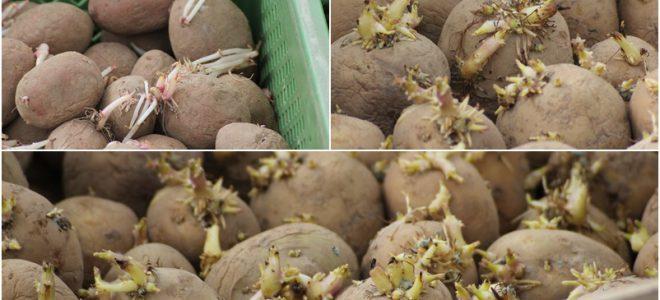 Die Kartoffeln sind drin!